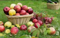 Dolce rustico di mele e pane