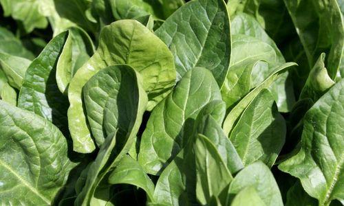 Ricetta Rotolo di spinaci